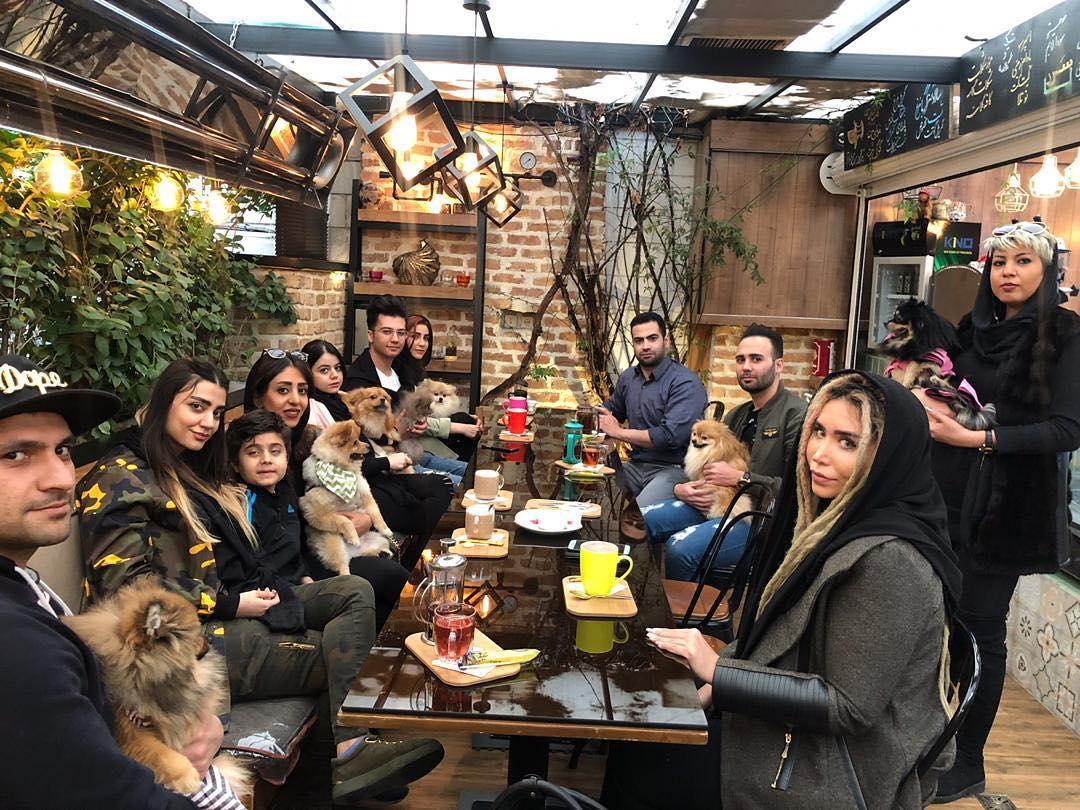 Pets cafe in Tehran